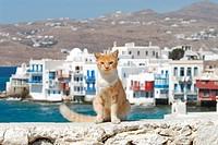 Hauskatze in Griechenland