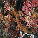 Seabed with Red algae.