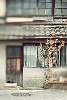 Old door, window and tree, Kyoto, Japan