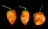 Three habanero peppers on a black background