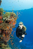 Scuba Diving in Red Sea, St  Johns, Red Sea, Egypt