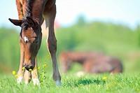 Little colt
