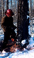 Snow view of lumberman cutting wood in Great Khingan,Heilongjiang province,China
