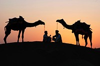 Camels with men chatting on sand dune after sunset , Khuri , Jaisalmer , Rajasthan , India