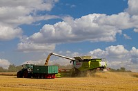 Combine Harvester at work, Germany