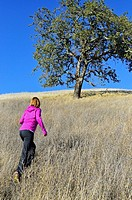 Woman climbing up grassy hill toward oak tree, Palo Alto, California, USA