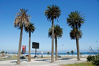 Palm trees on the beach in Coquimbo Chile Peñuelas
