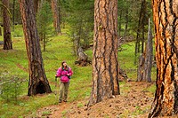 Malheur River Trail with ponderosa pine, Malheur Wild and Scenic River, Malheur National Forest, Oregon
