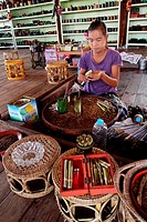 Burmese Woman of Intha Ethnic Group Making Cheroots, Inle Lake, Shan state, Myanmar, Burma