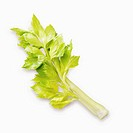Branch of celery