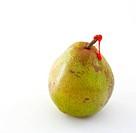 Decana pear