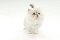 A kitten looking up
