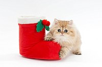 A kitten with a christmas boot
