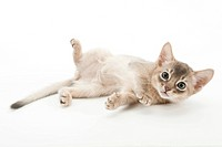 A kitten turning over