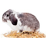 Adorable rabbit isolated on a white background.