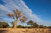 Impressionen von Namibia, Brandberg, Erongo, Namibia