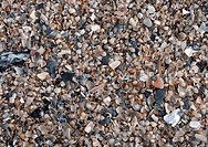 Florida´s coastal Atlantic beaches are littered with remnants of sea life washed up with the waves and tides.