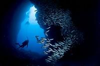 Diver inside Cave, Cocos Island, Pacific Ocean, Costa Rica