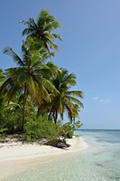 Coconut trees on pristine tropical beach, Saona Island, Dominican Republic