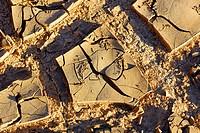 Drying river silt after a flood, Kalamurina Station Wildlife Sanctuary, Lake Eyre Basin, northeast South Australia