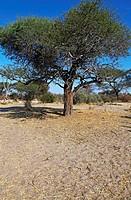 Landschaft im Makgadikgadi Pans National Park, Botswana, landscape at Makgadikgadi Pans National Park, Botsuana