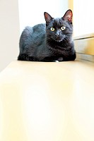 Black cat resting on a wooden windowsill in the house