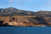 Socorro island sea cliff, volcanic island part of the Revillagigedo archipelago on the Pasific ocean, Mexico
