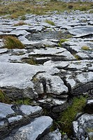 the Burren in County Clare, Ireland