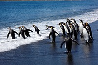 Antartica, Shetland, deception island, penguins