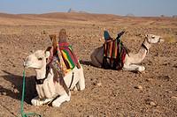 Algeria, Africa, north Africa, desert, stone desert, rocky desert, gibber plain, Sahara, Tamanrasset, Hoggar, Ahaggar, mountain, mountains, Tuareg, ri...