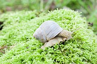 Snail crawling on the forest moss