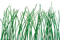 Horsetail Equisetum background