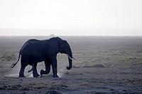 Twilight and sandstorm in Amboseli National Park. Kenya.