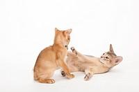 Two playing kitten