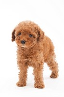 A puppy