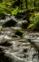 Radiant water, Great Smoky Mountains, in spring.