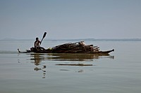 A local man transports wood across Lake Tana by Tankwa (Papyrus Boat), from the Zege Peninsular to Bahir Dar, Lake Tana, Ethiopia