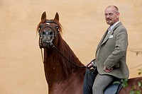 Frederiksborger. Chestnut stallion with rider