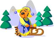 Tiger winter color 01