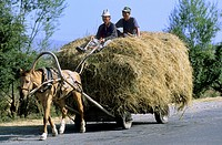 Issyk Kul Lake; Horse Cart; Hay Harvest; Kyrgyzstan