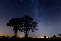 Starry Sky with trees, Niedersachsen, Germany / Sternenhimmel mit Bäumen, Niedersachsen, Deutschland
