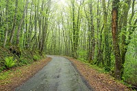 Country road through lush green forest, La Creuse, Limousin, France
