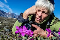 Photographer with dwarf fireweed Chamerion latifolium in Heckla Haven, Northeast Greenland