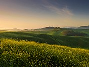 Lush Rolling Hills At Sunrise;Tuscany Italy