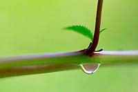 water drop on plant, Germany, Saxony
