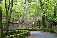 Lovely Forest And Country Road On The South West Coast Path Near Lynmouth, Exmoor, United Kingdom