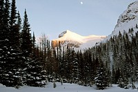 Winter Scene At Sunshine Ski Resort In The Canadian Rockies, Banff, Alberta, Canada