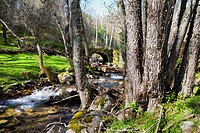 Solana Toro stream in the Iruelas Valley. Sierra de Gredos. Avila. Castilla Leon. Spain