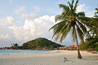 Beach with palm trees in the morning, Pulau Redang island, Malaysia, Southeast Asia, Asia