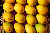 Fruits , Mangoes the king of the fruits are available in summer months in India, Locally called as Aaphuz
